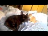 Кровожадный кот убийца собак