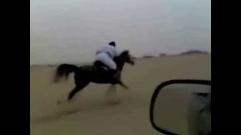 Sheikh Mustafa bin Sheikh Abdulcadir Arab Horse Riding in the Desert
