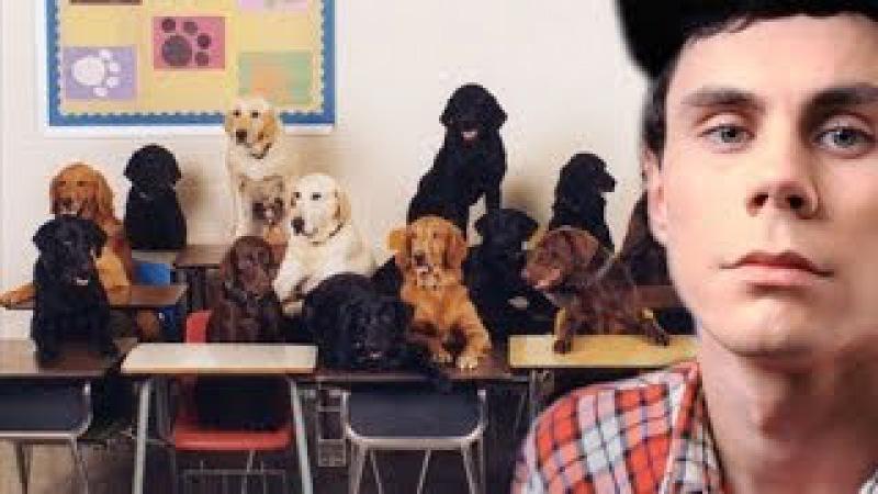 Собаки читают твои мысли — ТОПЛЕС » Freewka.com - Смотреть онлайн в хорощем качестве
