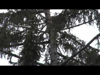 Рятувальники зняли кошеня із дерева