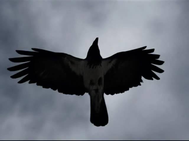 Черный ворон (Musta korppi; The Black Raven) / Максим Трошин