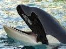 Самые опасные животные. Морской мир.HDTVRip(720p).