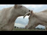 Документальный фильм Коровы / Bovines / A Cow's Life. (2011)(Франция)