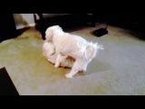 Собачья Камасутра - Видео из +100500