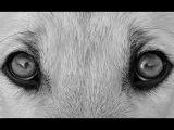 Светлана Копылова - Про собаку