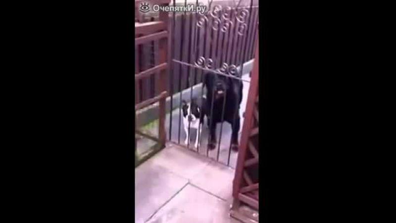 Собака передразнивает хозяина