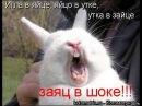 Приколы с животными 2014 Самые смешные /Смешно до боли