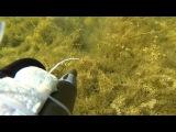 Подводная охота змееголов часть1