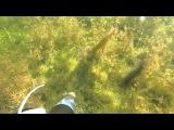 Подводная охота змееголов хотел уплыть