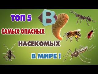 Шок! Топ-5 САМЫХ ОПАСНЫХ НАСЕКОМЫХ В МИРЕ!/DANGEROUS INSECTS