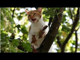 Тексты  для аудирования  - очень смешной рассказ про котенка!