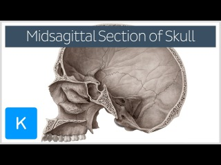 superior view of the base of the skull anatomy kenhub - 320×180