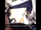 Собака которая любит селфи