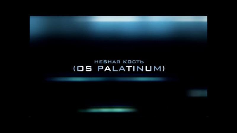 Нёбная кость (Os palatinum)