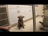 Ветеринар вернул зрение слепому щенку