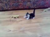Cat vs Lizard