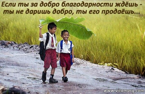 Пьяные афоризмы - VTDesign ru