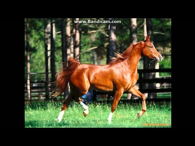 Рыжий конь не сделано в слайд шоу собственое