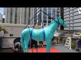 Lucy Lawless's horse Argo takes the plunge from the Sky Tower with Ellerslie