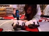 Пародия на клип Алексея Воробьева -