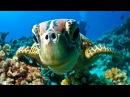 Great Barrier Reef Dive Snorkel - Port Douglas Australia