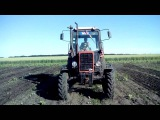 МТЗ-82 междурядная культивация MTZ-82 inter-row cultivation