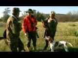 Охота на фазана в Ростовской области | Сезон охоты