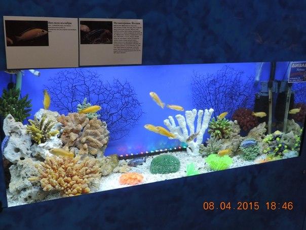 Яркий аквариум (16.04.2015)