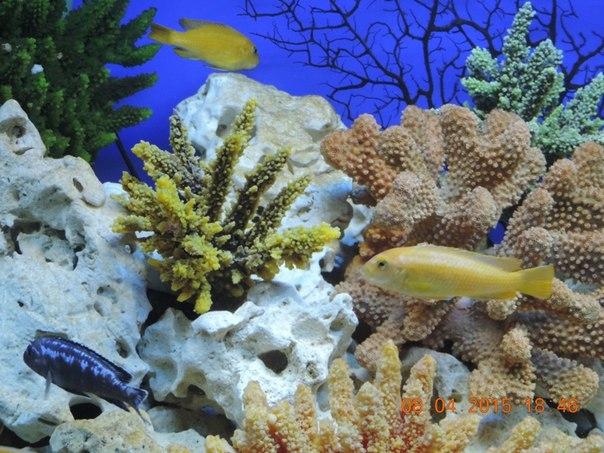 Кораллы как настоящие (16.04.2015)