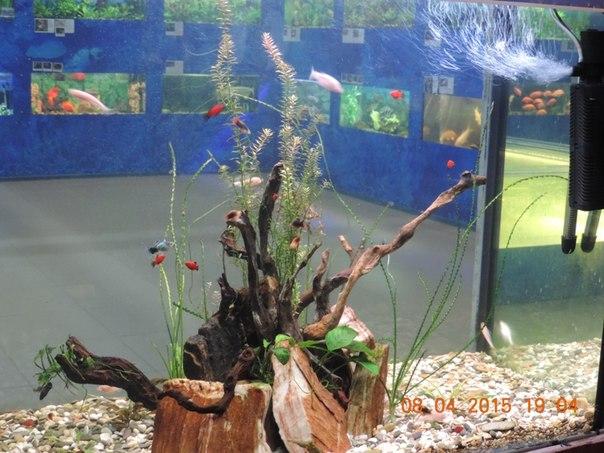 Сквозь аквариум (16.04.2015)