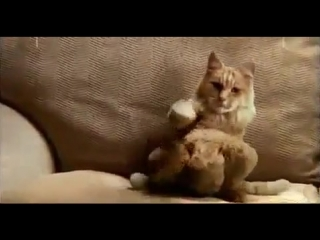 ПРИКОЛ ПРО КОТА!(круто танцует)