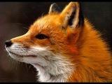 Ylvis - The Fox (what does the fox say) Lyrics