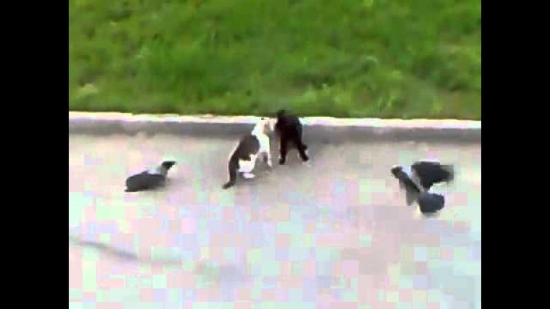 Коты и вороны