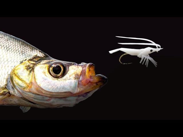 Skygazer fish fishing with straw shrimp (빨대새우로 강준치낚시)