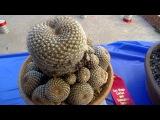 Выставка кактусов в Сан-Диего
