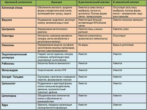 органеллы животной клетки таблица