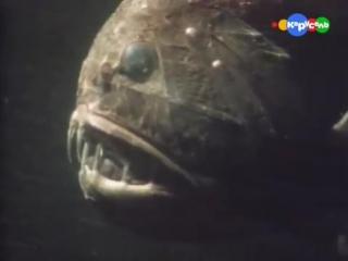 BBC - Очевидец - Рыбы