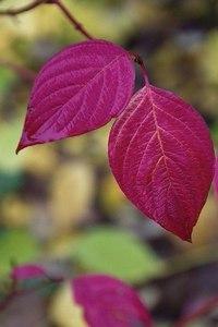 Отцвели цветы, падают листья, птицы молчат, лес пустеет и затихает.ОСЕНЬ. - Страница 6 IX5qPBMnWRk