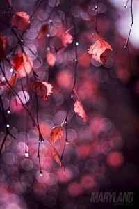 Отцвели цветы, падают листья, птицы молчат, лес пустеет и затихает.ОСЕНЬ. - Страница 6 TUTvJt9LgMk