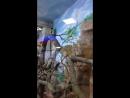 5 июля 2015 Обезьянки в магазине Планета Железяка