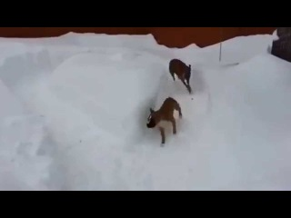An old dog does go crazy a young dog in the snow x5 - Funny Cats - Funny Animals Videos - Funny Dogs