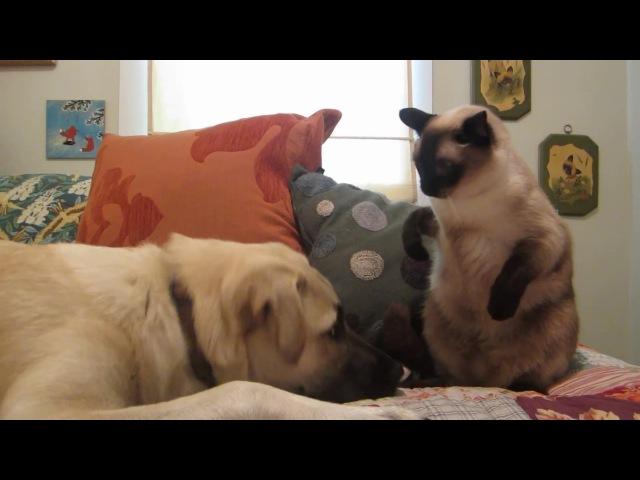 Бокс: Кот vs Пес | Cat boxing dog