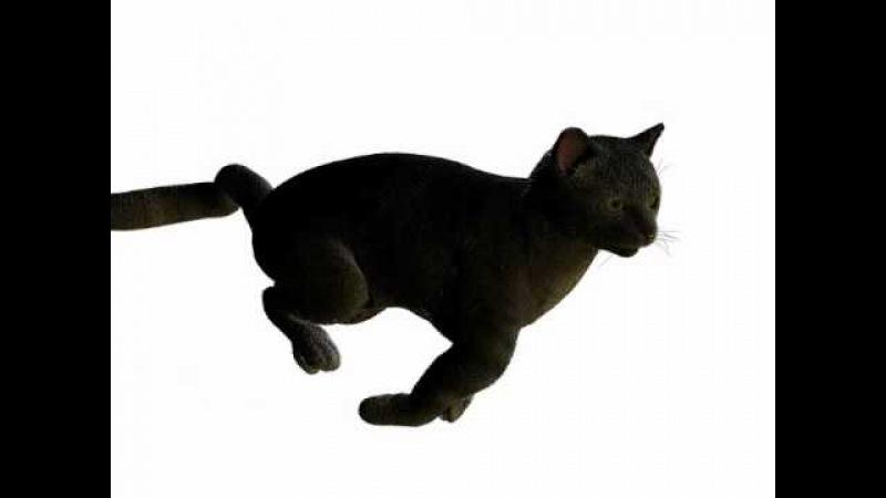 Meow! sad toy cats.wmv