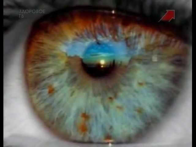 Тело человека. Глаз (Oculus). Зрение