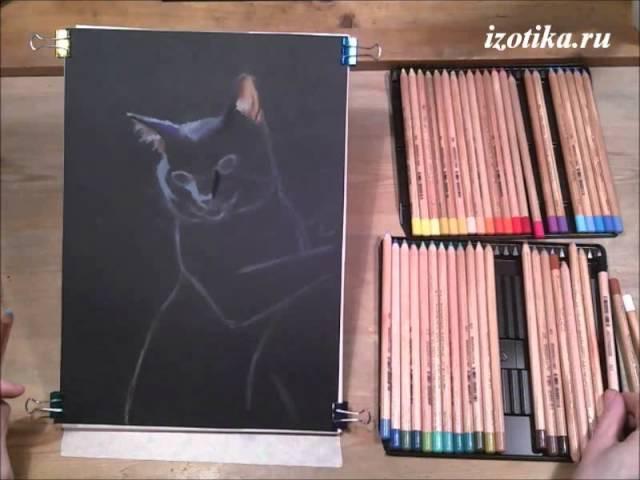 Черный кот. Пастельные карандаши