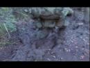 ARMY RANGER AIRBONE ВДВ