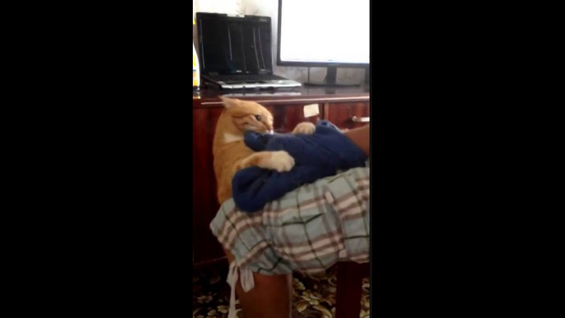Мстительный кот   Cat's revenge