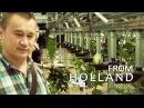 Профессиональная гидропоника в Голландии. Теплица с розами