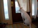 Собака безмерно счастлива встречать своего вернувшегося из армии хозяина!