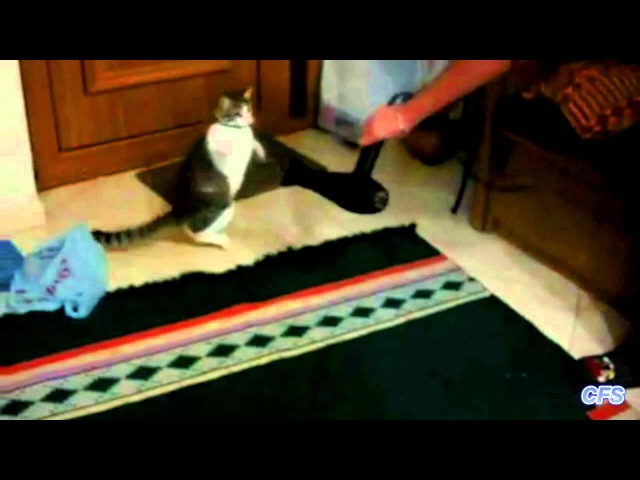 Cats vs Hair Dryers Compilation CFS